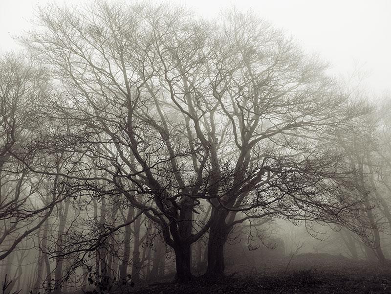 Dezember Bäume