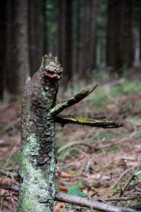 Waldschrate#8 by Michael Krämer