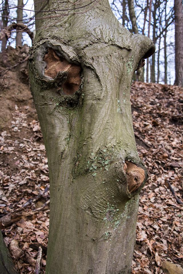 Waldschrate#6 by Michael Krämer