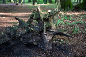 Waldschrate#5 by Michael Krämer