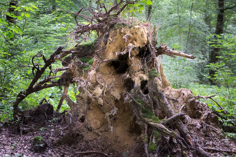 Waldschrate#4 by Michael Krämer