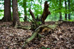 Waldschrate#3 by Michael Krämer