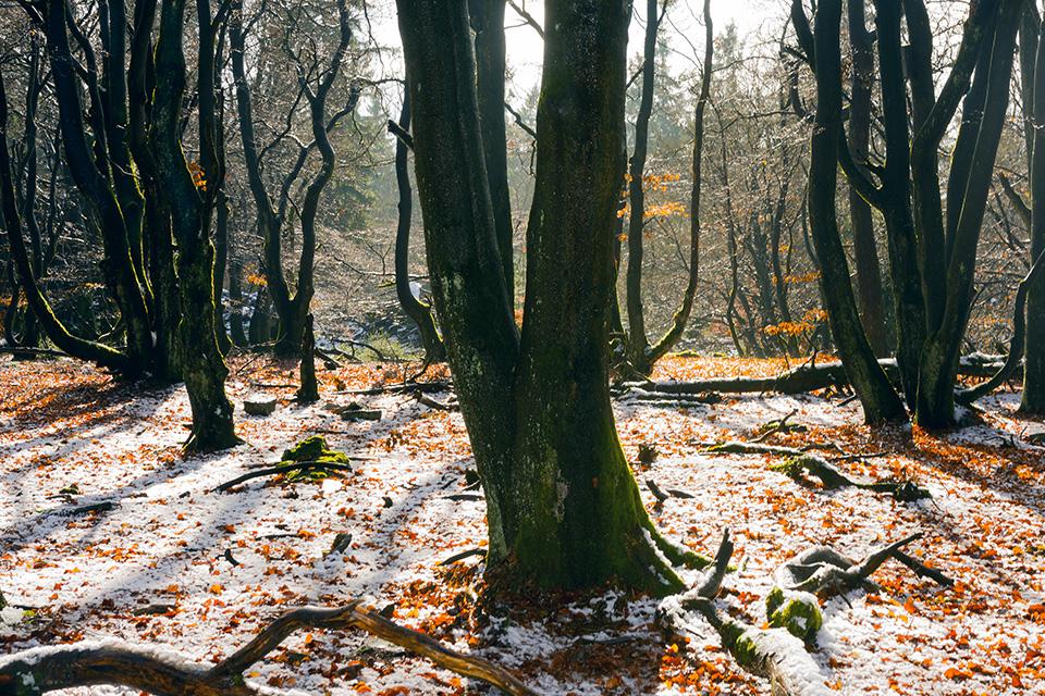 glittering trees