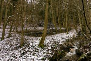 familiar environment: Daisbach alter Fischteich