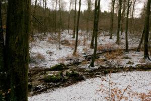 familiar environment: Daisbach Bachlauf und Felsen