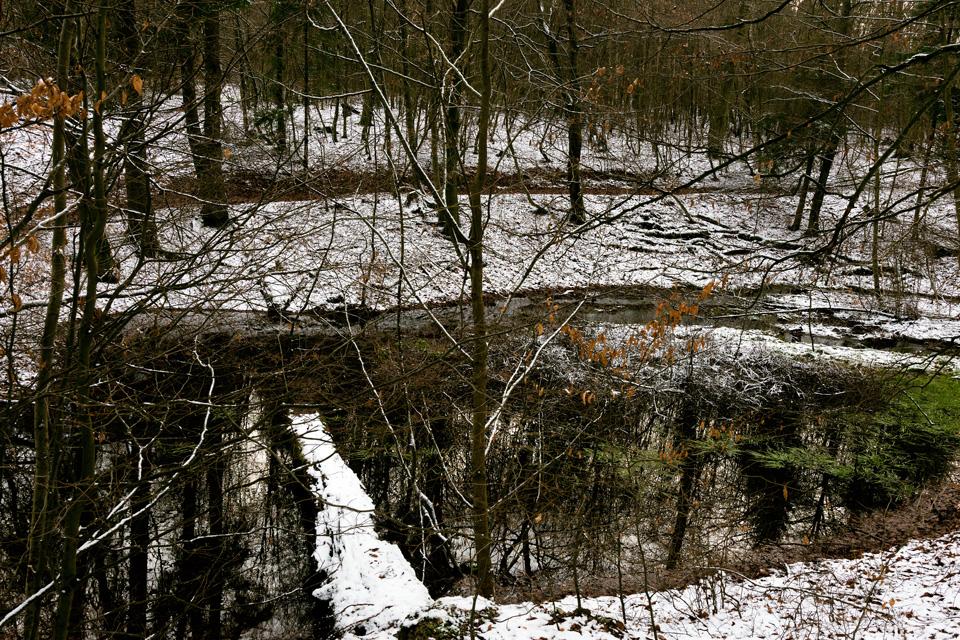 familiar environment: Daisbach Nymphen Weiher