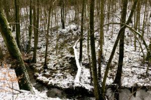 familiar environment: Daisbach Bachlauf