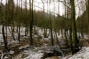 familiar environment: Daisbach Zufluesse