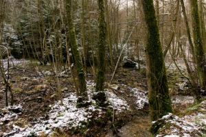 familiar environment: Daisbach Quellen zwei