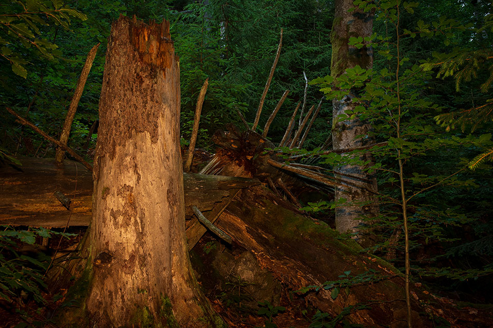 Nationalpark Bayerischer Wald - Felswandergebiet#6