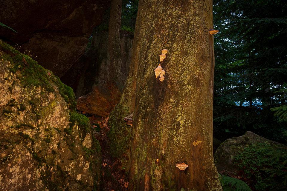 Nationalpark Bayerischer Wald - Felswandergebiet#5