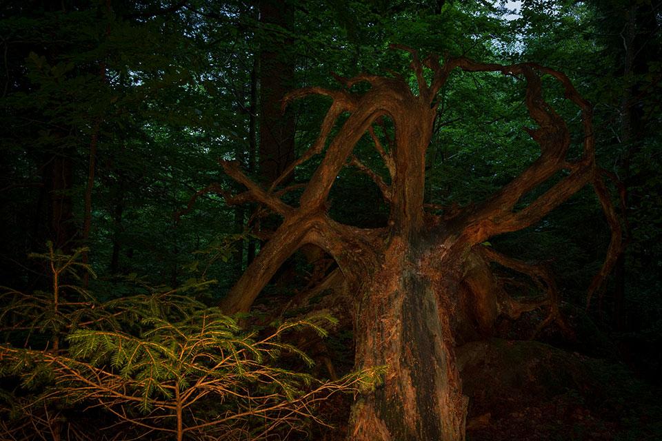 Nationalpark Bayerischer Wald - Felswandergebiet#4