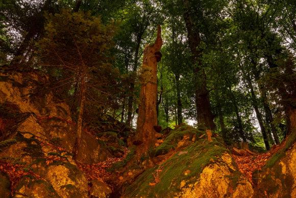Nationalpark Bayerischer Wald - Felswandergebiet#1
