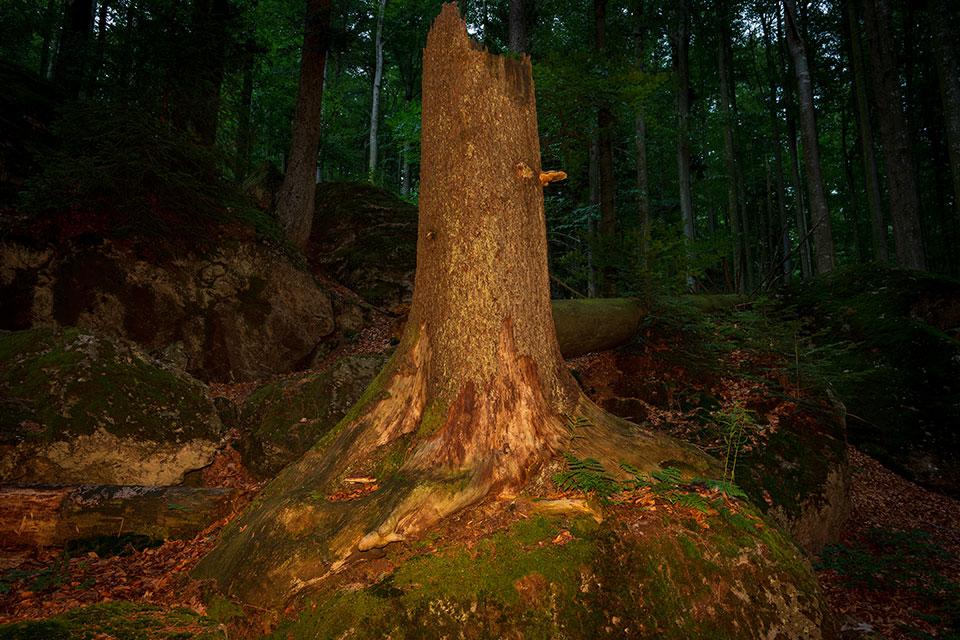 Nationalpark Bayerischer Wald - Felswandergebiet#8
