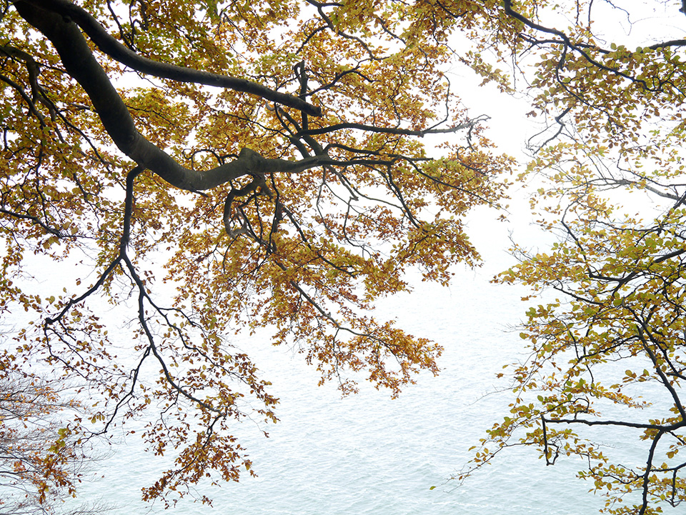 autumn by the sea #1