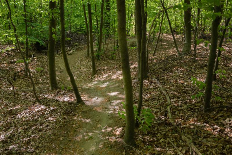 Singel Trail #1