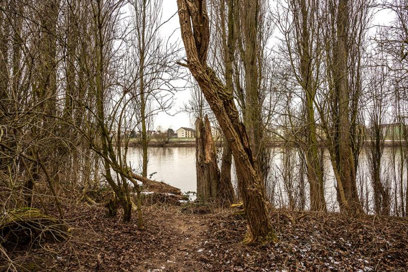 Rhein-Main #1 Blick nach Gustavsburg
